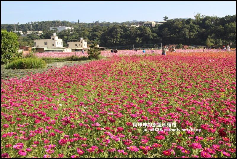 大溪花海18.JPG