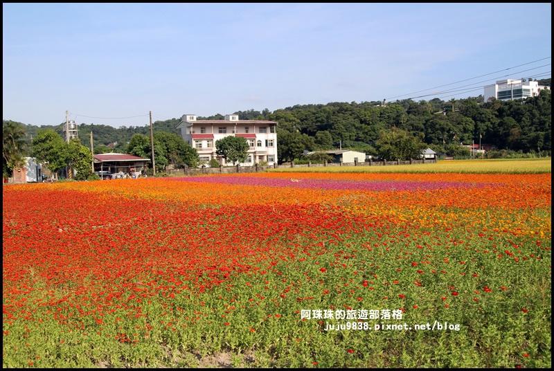 大溪花海28.JPG