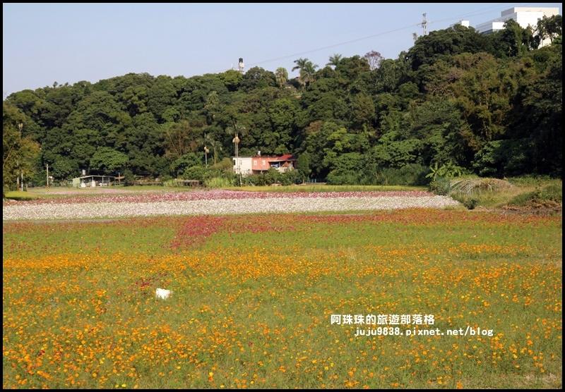 大溪花海37.JPG