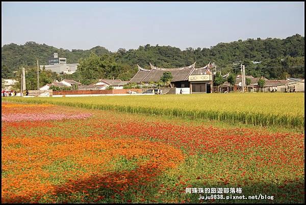大溪花海44.JPG
