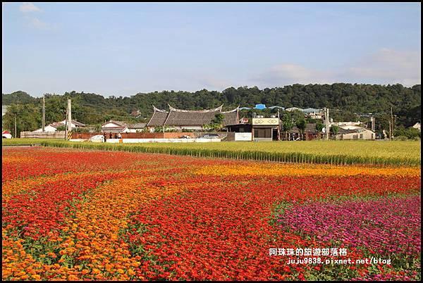 大溪花海45.JPG