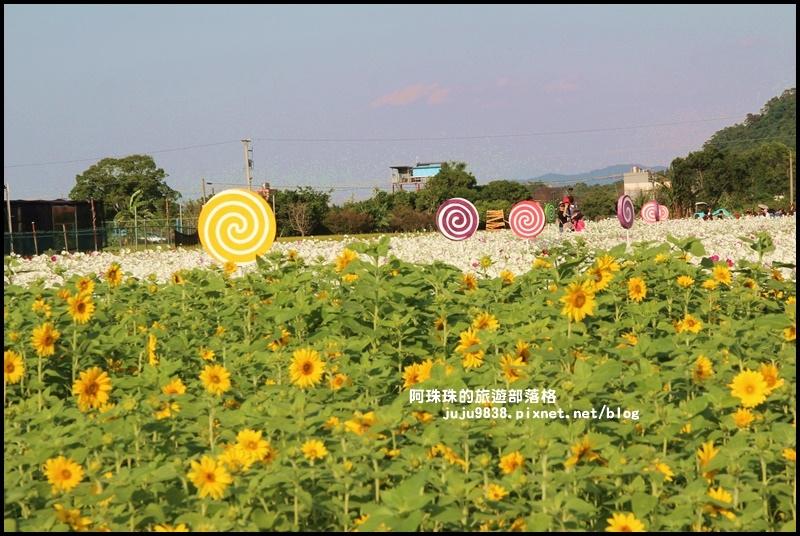 大溪花海48.JPG