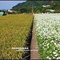 大溪花海52.JPG