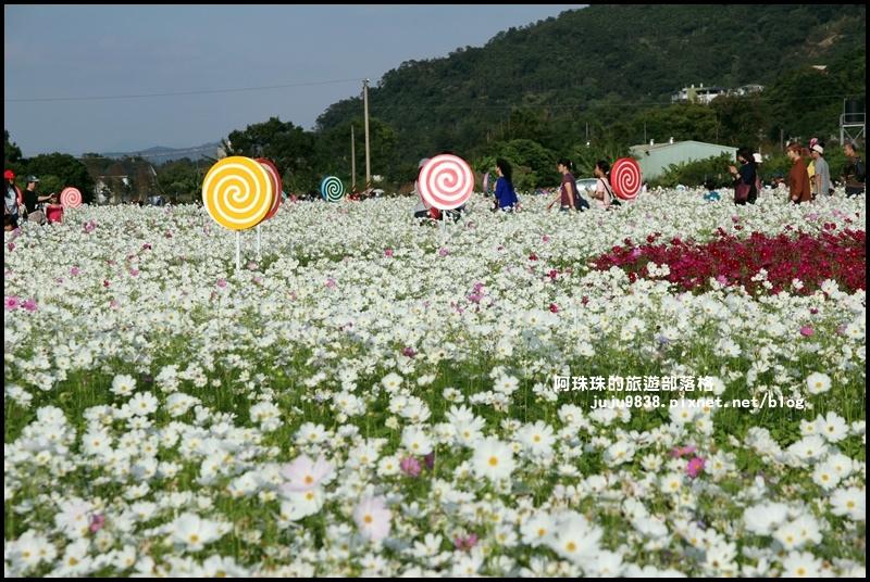 大溪花海49.JPG