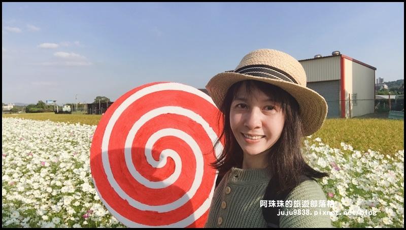 大溪花海77.JPG