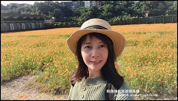 大溪花海74.JPG