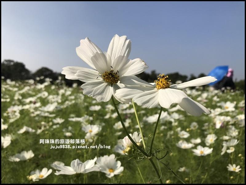 中壢花海26.JPG
