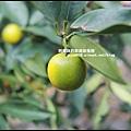 鹿鳴坑觀光果園4.JPG
