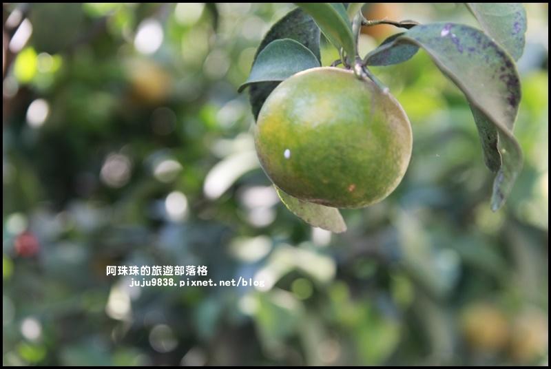 鹿鳴坑觀光果園7.JPG