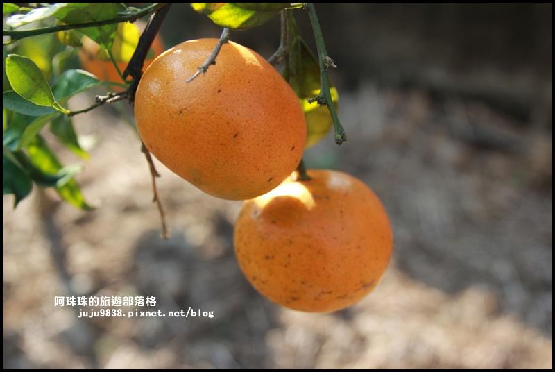 鹿鳴坑觀光果園14.JPG