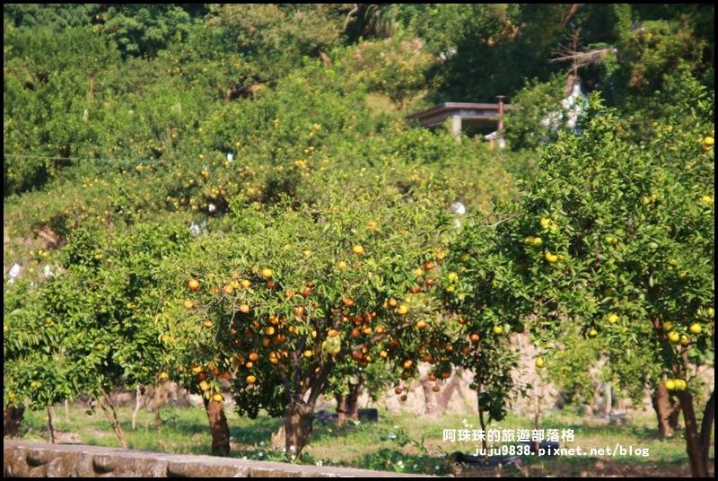 鹿鳴坑觀光果園11.JPG