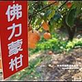 鹿鳴坑觀光果園15.JPG