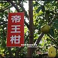 鹿鳴坑觀光果園22.JPG