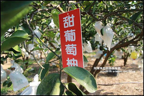 鹿鳴坑觀光果園17.JPG