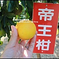 鹿鳴坑觀光果園25.JPG