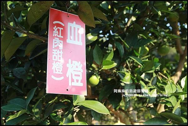 鹿鳴坑觀光果園35.JPG