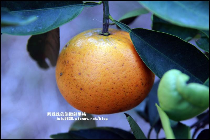 鹿鳴坑觀光果園45.JPG