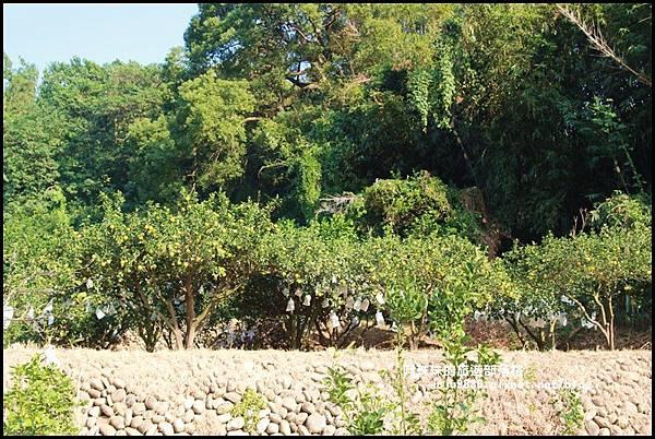 鹿鳴坑觀光果園30.JPG