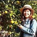鹿鳴坑觀光果園39.JPG