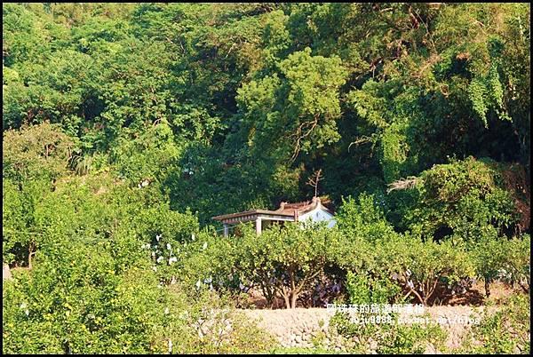 鹿鳴坑觀光果園48.JPG