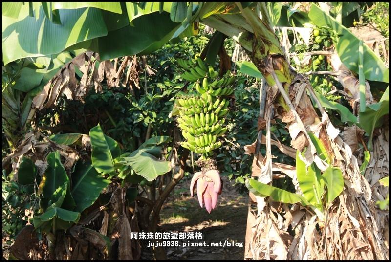 鹿鳴坑觀光果園42.JPG