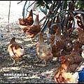 鹿鳴坑觀光果園57.JPG