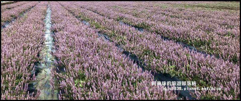 楊梅仙草節44.JPG