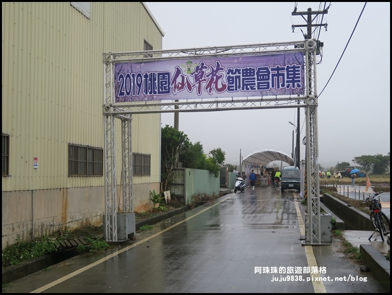 楊梅仙草節38.JPG