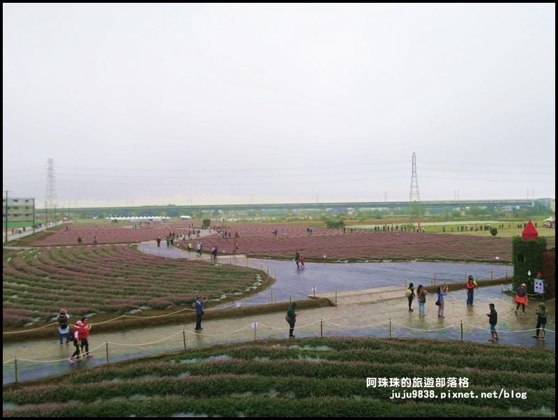 楊梅仙草節40.JPG