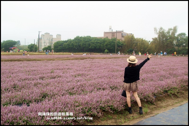 楊梅仙草節18.JPG