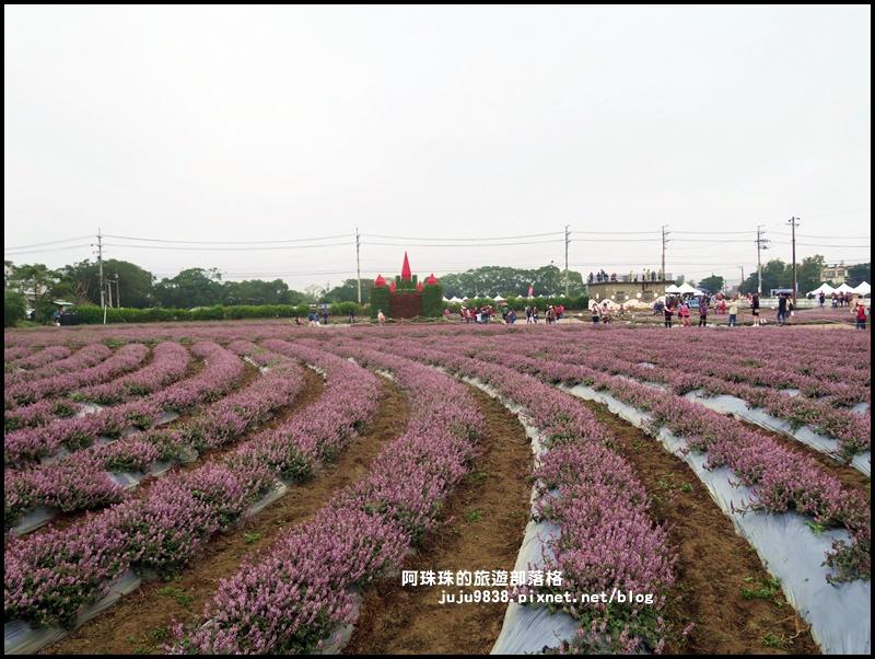 楊梅仙草節42.JPG