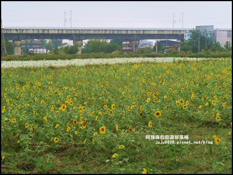 楊梅仙草節43.JPG
