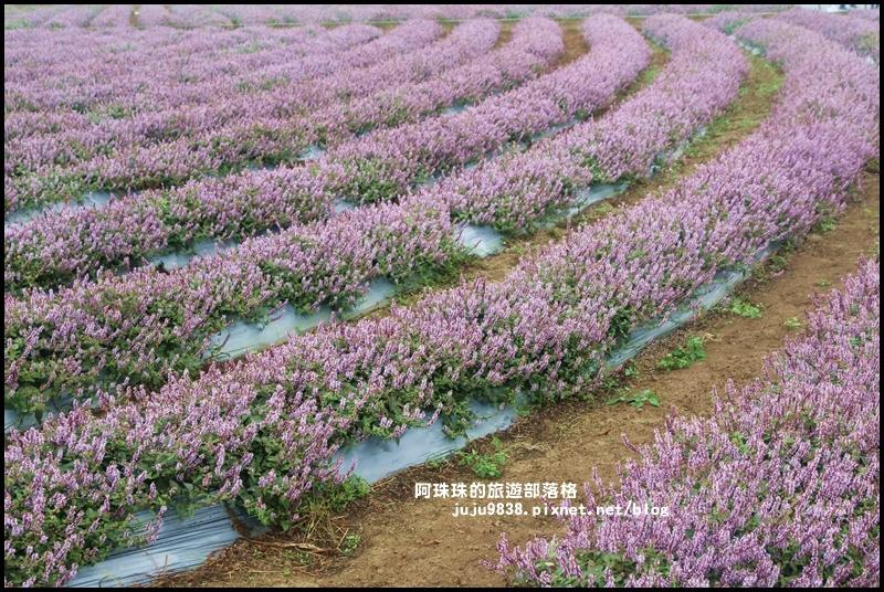 楊梅仙草節25.JPG