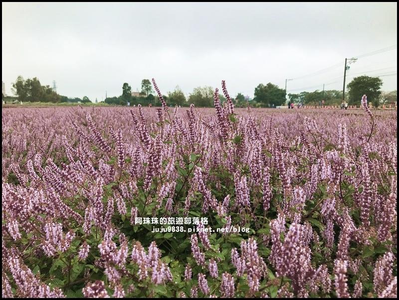 楊梅仙草節50.JPG
