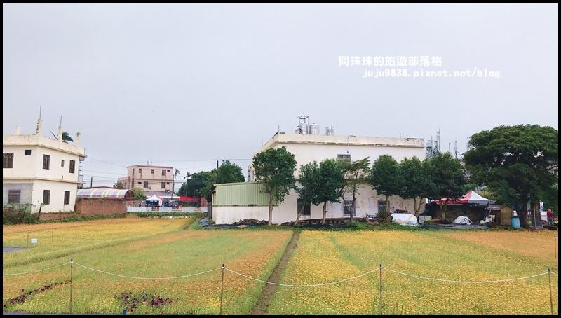 楊梅仙草節45.JPG