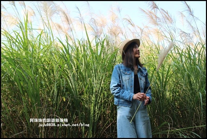 楊梅落羽松秘境8.JPG