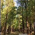 楊梅落羽松秘境35.JPG