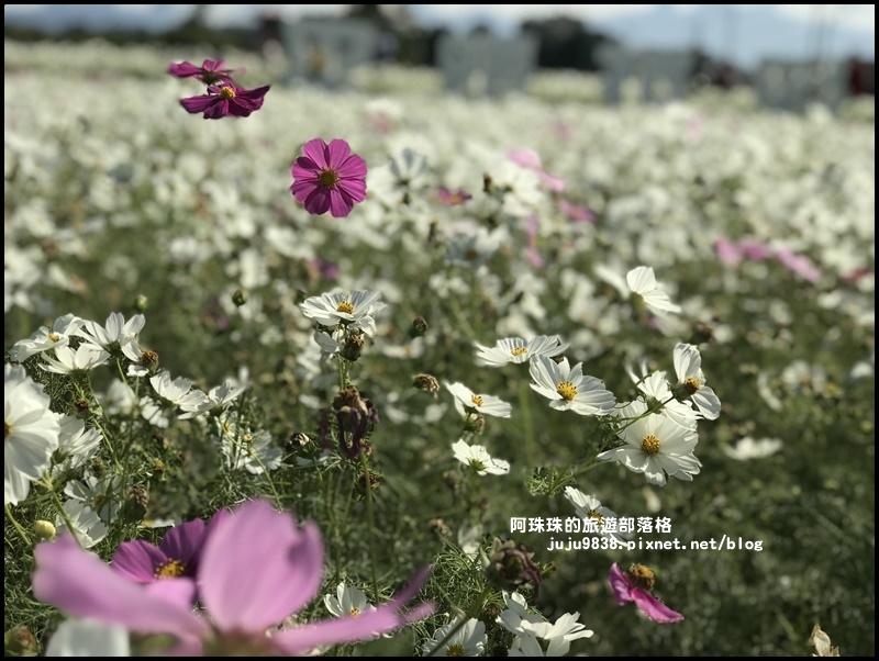 平鎮花彩節42.JPG