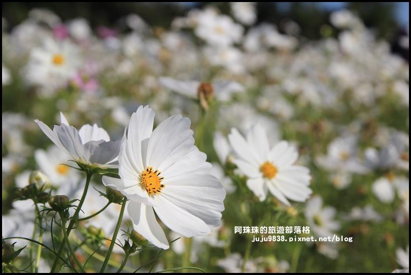 平鎮花彩節7.JPG