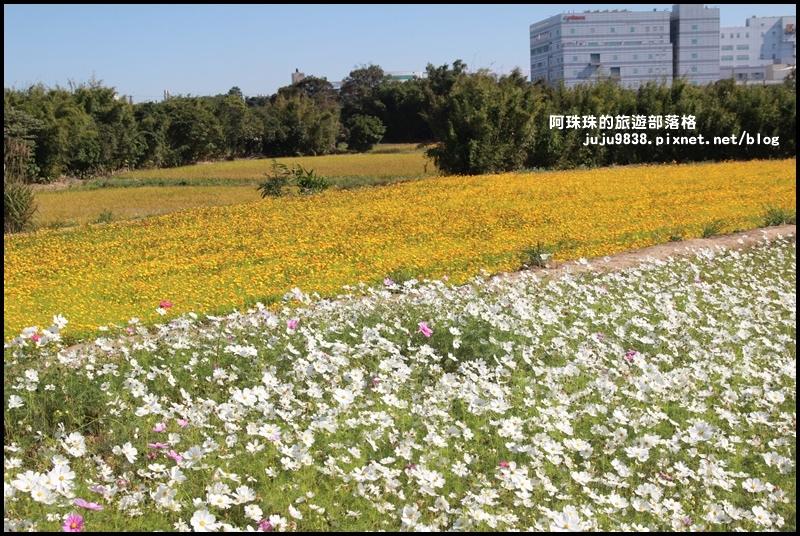 平鎮花彩節11.JPG