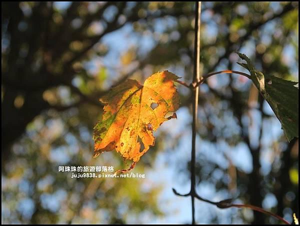 阿里山小笠原觀景台9.JPG