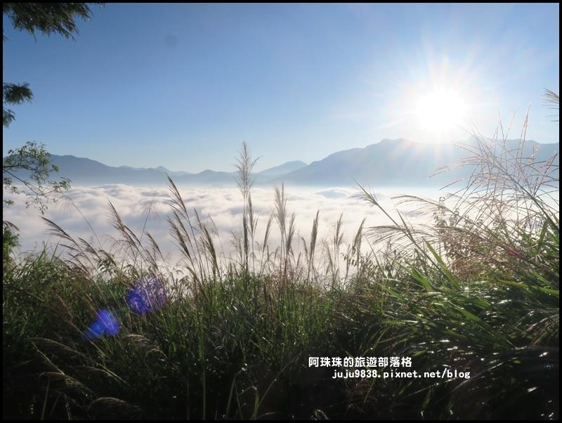 阿里山小笠原觀景台10.JPG