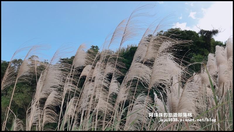 三坑生態公園82.JPG