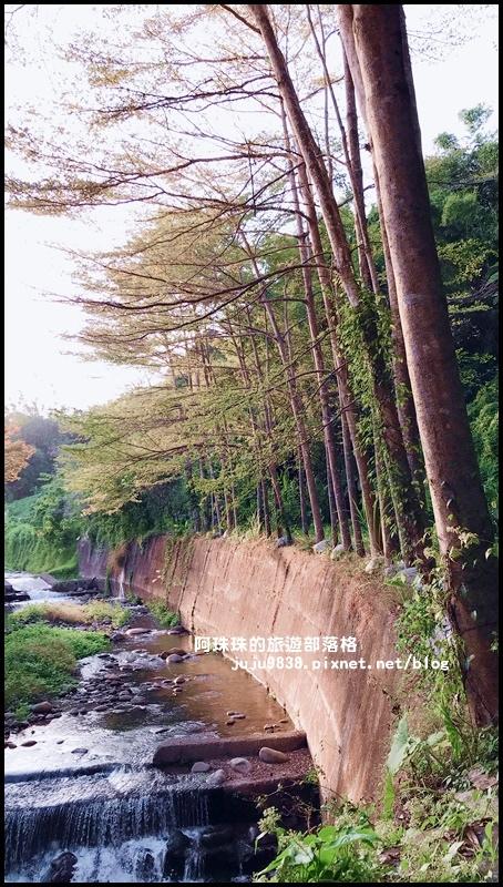 三坑生態公園95.JPG