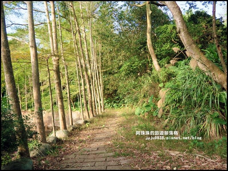 小葉欖仁秘境步道18.JPG