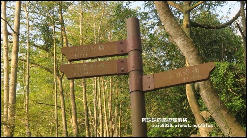 小葉欖仁秘境步道17.JPG