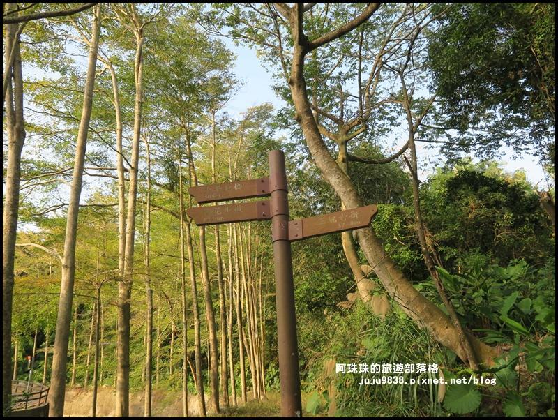 小葉欖仁秘境步道16.JPG