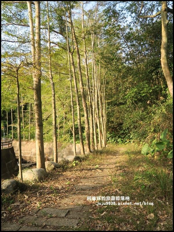 小葉欖仁秘境步道19.JPG