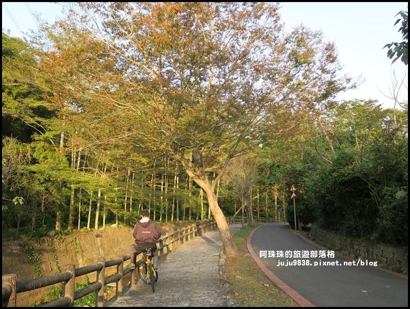 小葉欖仁秘境步道22.JPG