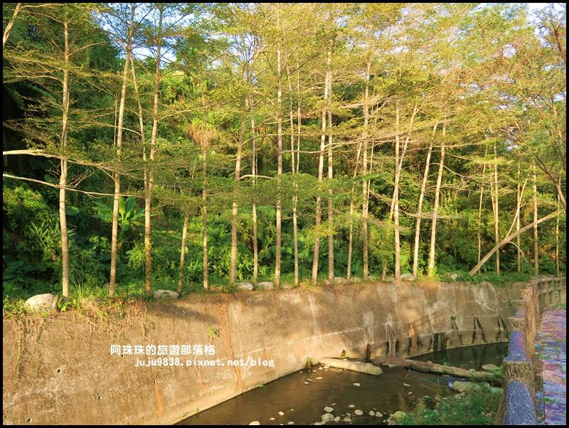 小葉欖仁秘境步道23.JPG
